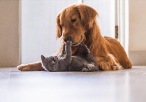 Animali domestici, un amore che non conosce crisi. CNA affilia i toelettatori di animali